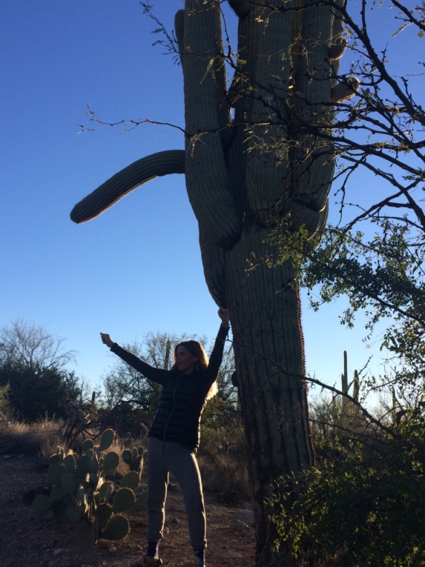 Feeling the strength of the saguaro cacti